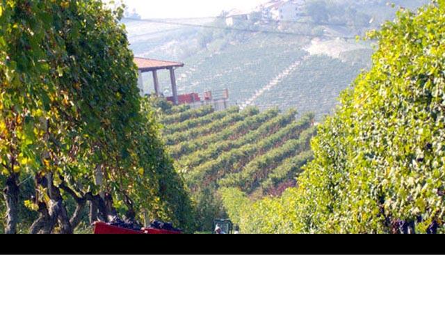 neive territorio vitivinicolo